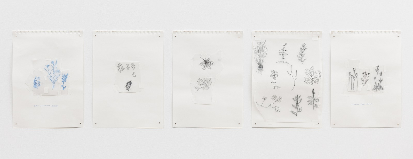Carlos Bunga ,   Thoughts Aloud (Nature)  ,  2017     pen and painter's tape on tracing paper in 5 parts      